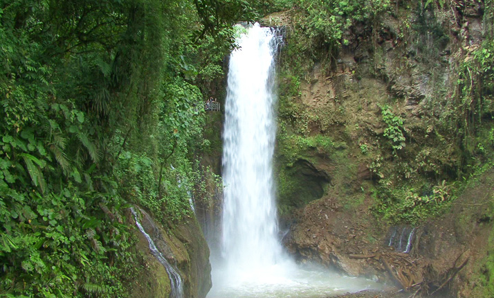 TROPICAL EXPEDITION WITN MONTEVERDE 8 DIAS $1300